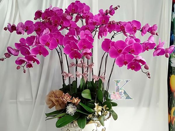 loài hoa sang trọng nhất hiện nay